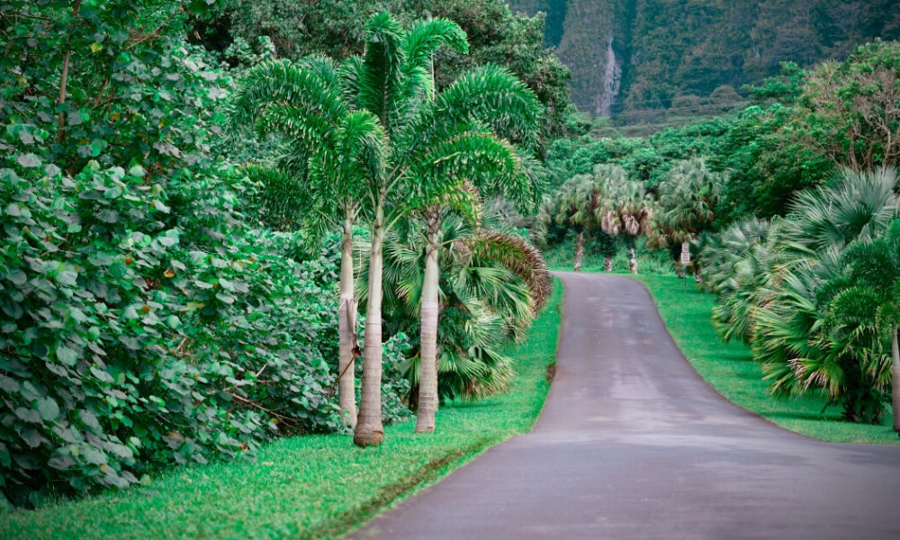 Things to do in Maui